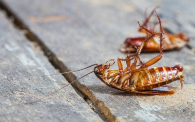 How to Kill Cockroaches Permanently – Tips & Traps