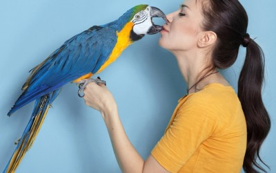 Selection of Suitable and Best Pets to Have