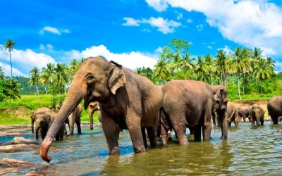 Sri Lanka Tourism – Best Places to Visit in Sri Lanka